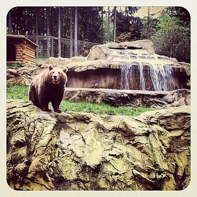 Bärig... #bär #bear #waterfall #epic Poster