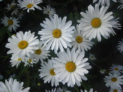 Bright Eyed Daisys Poster