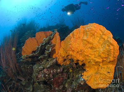 Bright Orange Sponge With Diver Poster