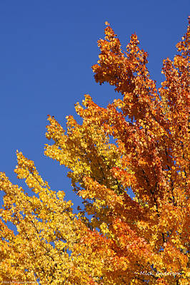 Brilliant Fall Color And Deep Blue Sky Poster by Mick Anderson