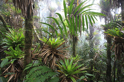 Bromeliads And Tree Ferns  Poster