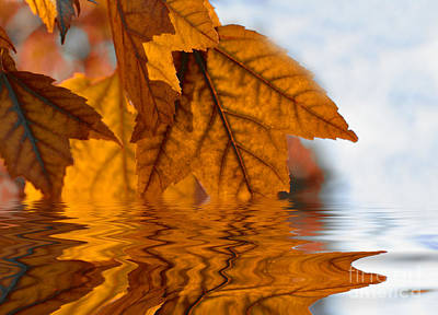Bronze Reflections In Autumn Poster