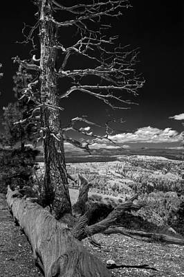 Bryce Canyon - Dead Tree Black And White Poster by Larry Carr
