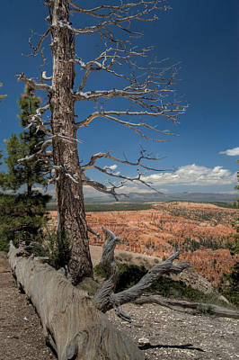 Bryce Canyon - Dead Tree Poster by Larry Carr