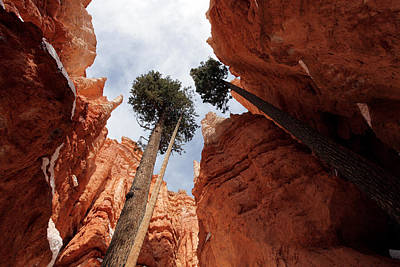 Poster featuring the photograph Bryce Canyon Towering Hoodoos by Karen Lee Ensley