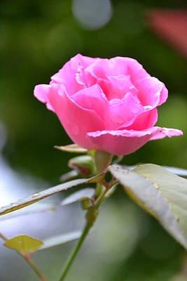 Bubblegum Rose Poster