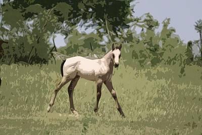 Buckskin Pony Poster