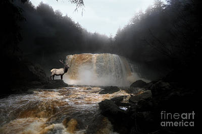 Poster featuring the photograph Bull Elk In Front Of Waterfall by Dan Friend
