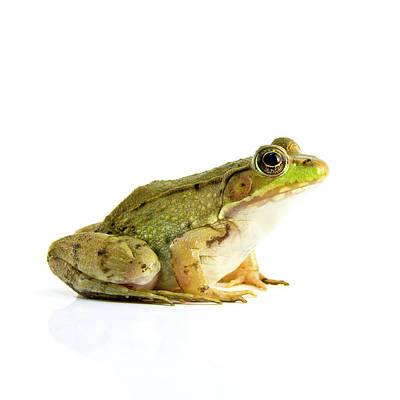 Bull Frog Poster by Richard Upshur