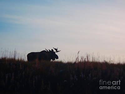 Bull Moose Silhouette Poster by Adam Owen