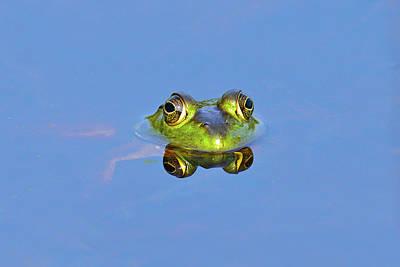 Bullfrog Poster by Brian E. Kushner