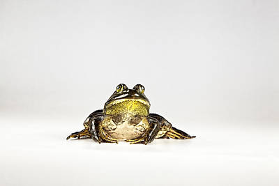 Poster featuring the photograph Bullfrog by John Crothers