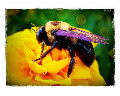 Poster featuring the photograph Bumblebee With Bokeh by Judi Bagwell