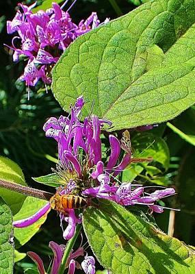 Bumbling Flora Poster