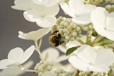 Bunblebee Hiding Poster by Michel DesRoches