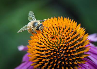 Busy Bee Poster by Jen Morrison