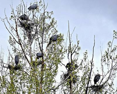 Busy Heron Rookery Poster
