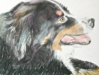Poster featuring the drawing Buttercup The Wonderdog by Beth Saffer