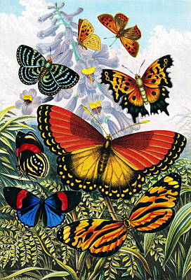Butterflies, Artwork Poster by Sheila Terry