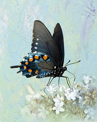 Butterfly Candy Poster by Betty LaRue