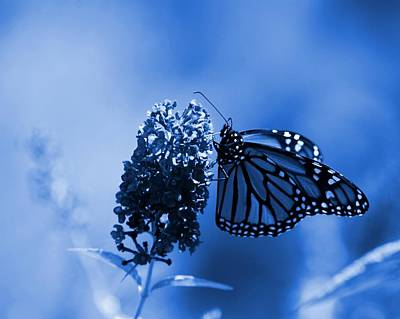 Butterfly In Blue Poster by Angie Tirado