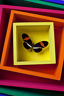 Butterfly In Box Poster by Garry Gay