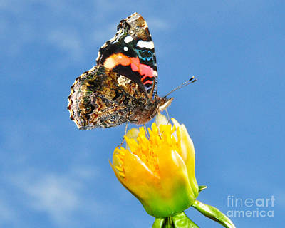 Poster featuring the photograph Butterfly N Flower by Jack Moskovita