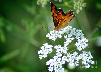 Butterfly On Lacy Wildflower Poster by Nava Thompson
