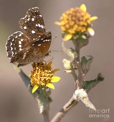 Poster featuring the digital art Butterfly On Marigold 1 by John  Kolenberg