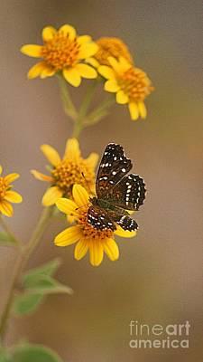 Poster featuring the digital art Butterfly On Marigold by John  Kolenberg