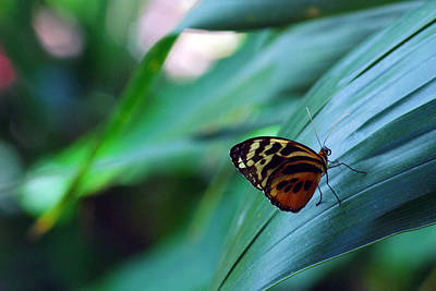 Poster featuring the photograph Butterfly Resting by Luis Esteves
