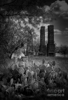 Cactus At Fort Phantom Hill Poster