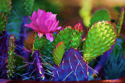 Cactus Flowers In Pink Poster by Brian Davis