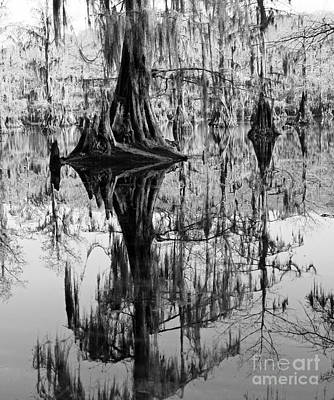 Caddo Lake 4 Poster by Gayle Johnson