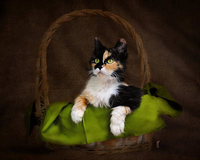 Calico Cat In Basket Poster by Jai Johnson