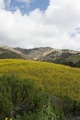 California Hillside View V Poster by Kathleen Grace