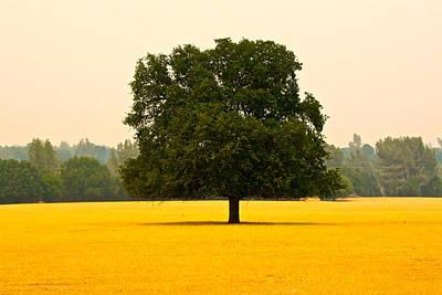California Oak Poster by Suzanne Lorenz