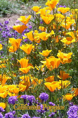 Poster featuring the photograph California Poppies by Carla Parris