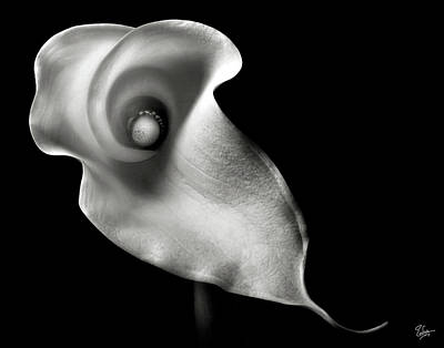 Calla Lily In Black And White Poster