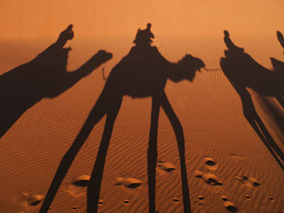 Camel Shadows In Sahara Desert Poster by Win Initiative