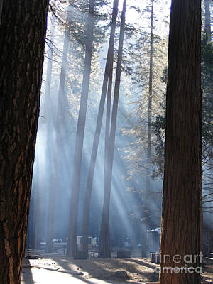 Campfire Smoke Through The Trees Poster