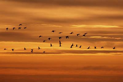 Canada Geese, Oak Hammock Marsh Poster by Mike Grandmailson