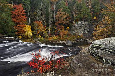 Cane Creek Cascade - D006063 Poster by Daniel Dempster