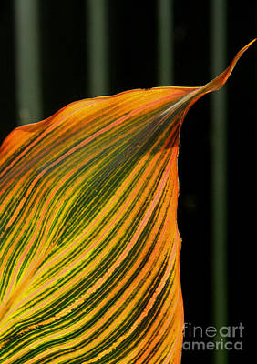 Poster featuring the photograph Canna Leaf by Nareeta Martin