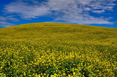 Canola Field In The Palouse Poster by David Patterson
