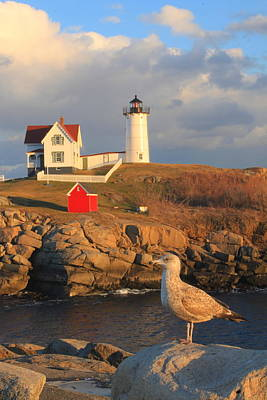 Cape Neddick Nubble Lighthouse And Seagull Poster by John Burk