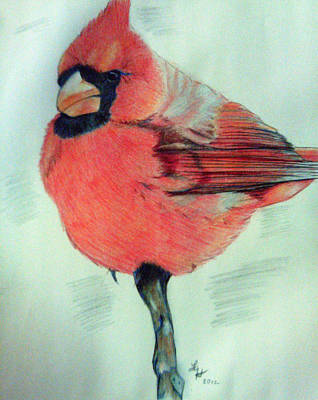Cardinal Study Poster by Loretta Nash