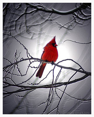 Poster featuring the photograph Cardinal by Yvonne Emerson AKA RavenSoul