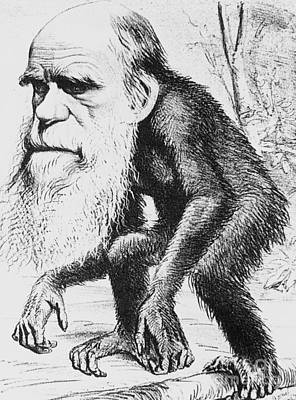 Caricature Of Charles Darwin, 1871 Poster by Science Source