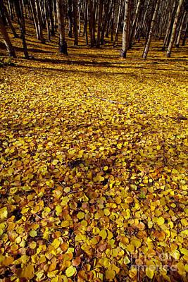 Carpet Of Aspen Leaves Poster